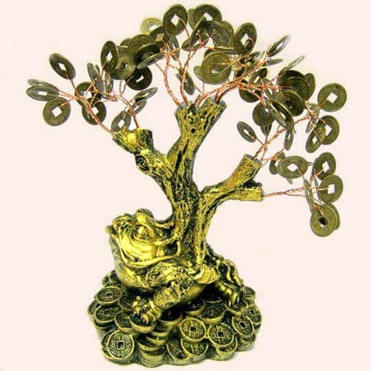 Денежное дерево на Жабе 20см