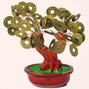 Денежное дерево 14см